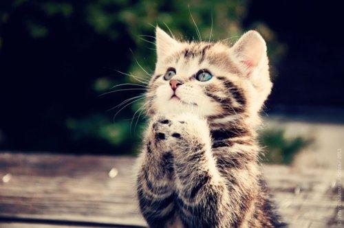j'aime les chats ^_^