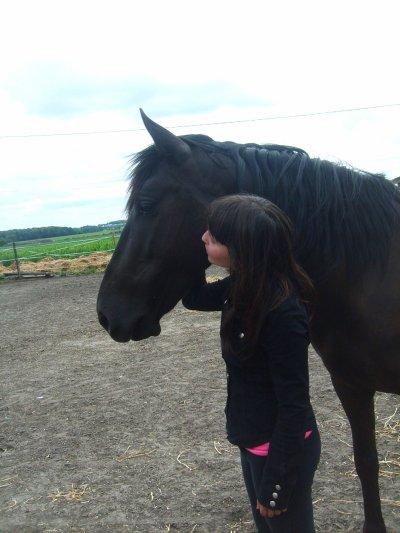 Chevaux / poney