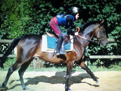 Chevaux / poney *