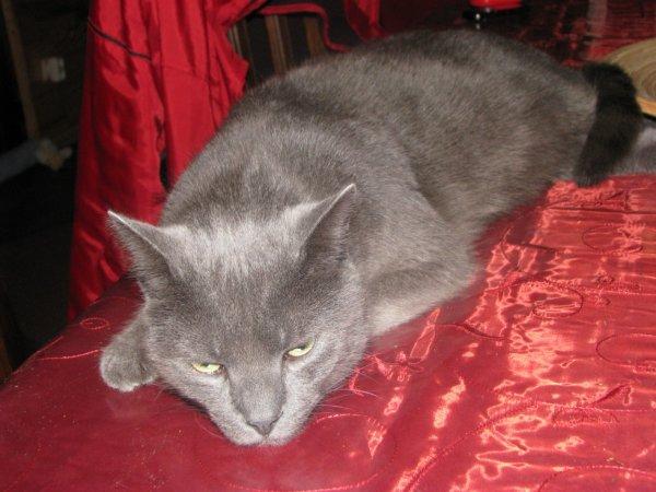 mon chat néron