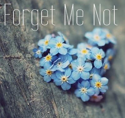 Concours d'écriture mai / Texte 1 «Forget Me Not »