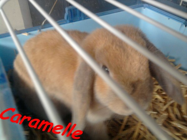 Mes animaux !♥