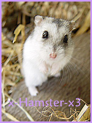 I want an hamster