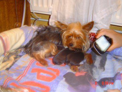 daisy et ses petit