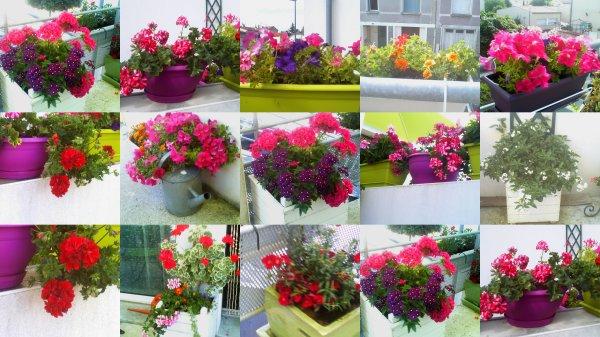 les fleurs de ma terrasse profitent du soleil et depuis une semaine elles poussent et. Black Bedroom Furniture Sets. Home Design Ideas