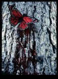 Photo de Bloody-Butterfly
