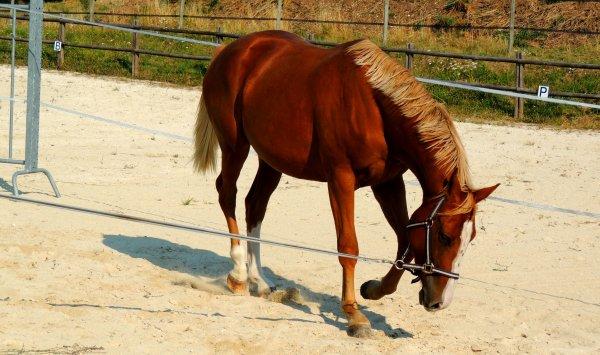 Un bon cheval n'est pas celui qui vous fera gagner en concours, mais celui qui donnerai tout pour vous faire plaisir.
