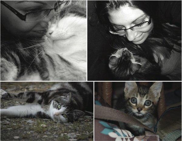 Mes amours de chats.  Bouille & Ezra. ♥