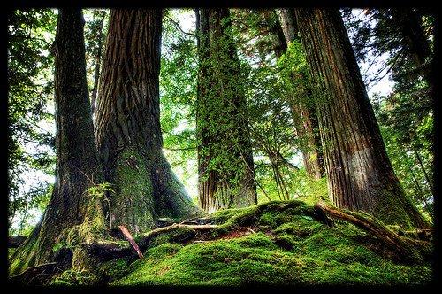 La forêt résiste dans le monde