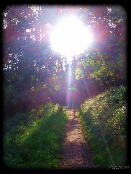 Parce qu'avant l'automne, j'avais envie de revoir la forêt...