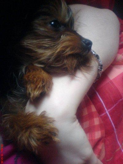 Meine Tiere ♥ Teil 6       R.I.P  mein Baby ♥ ηυя ∂ιє вєѕ†єη ѕ†яєвєη נυηg †† яυнє ιи fяιє∂єи