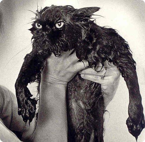 Ma voisine est dégouttée sa petite chatte est trempée..avec ce temps