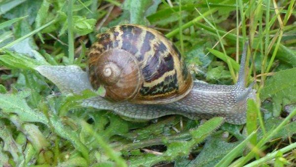 Escargots à l'ail ! de Bourgonie