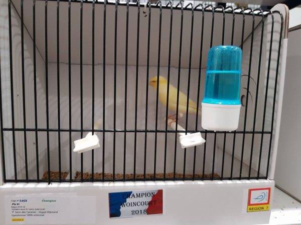mes oiseaux au France