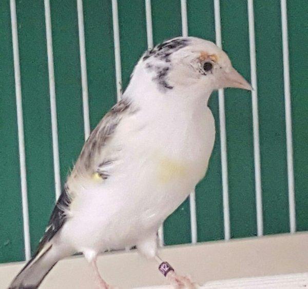 Mes oiseaux