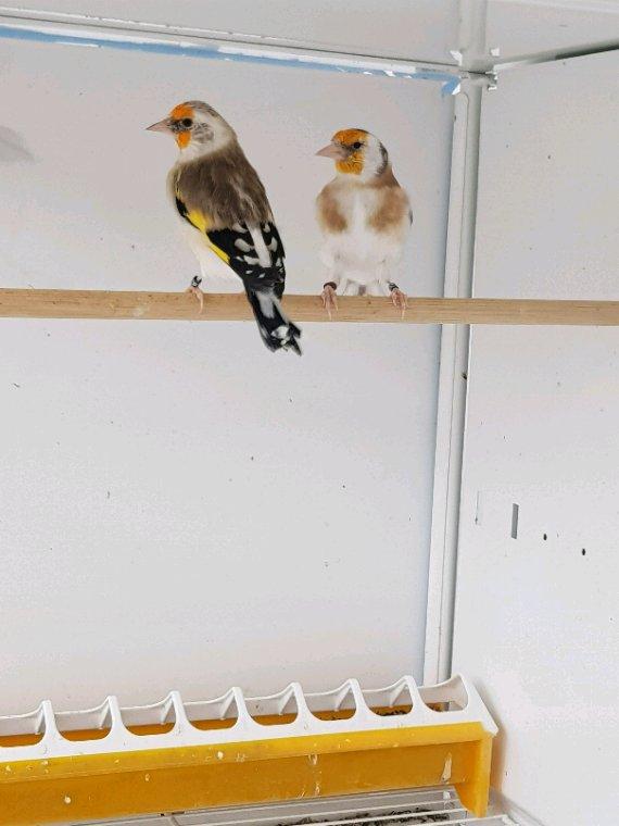 Quelques oiseaux à ceder
