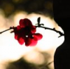 ≥  Les soleils de minuit (♪) - La Fouine