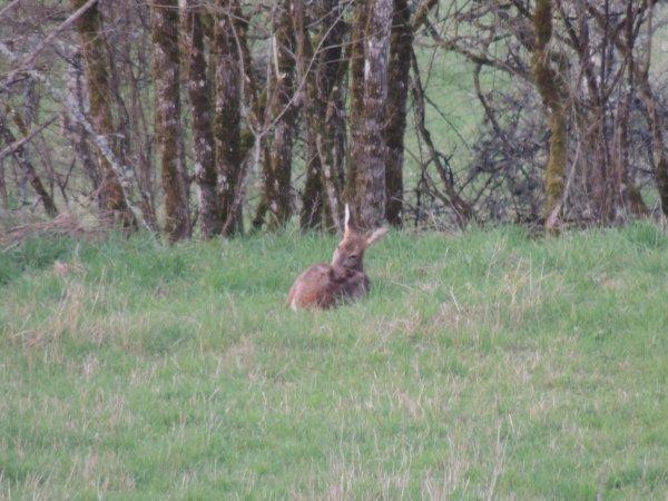 Dans l'herbe tendre ....