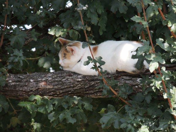 L'arbre à chat a repris du service