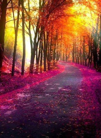 Magnifique paysage coloré