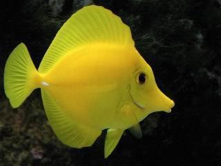 Le rêve du poisson de J'hall.