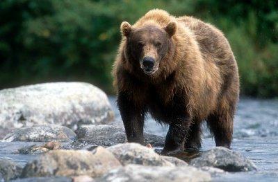 Le rêve de l'ours des îles de J'hall.