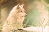 Original-Wild