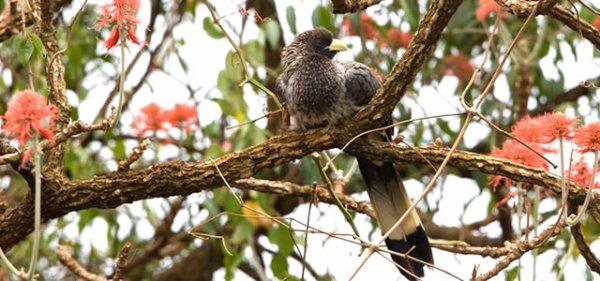 Bird Watching Trips
