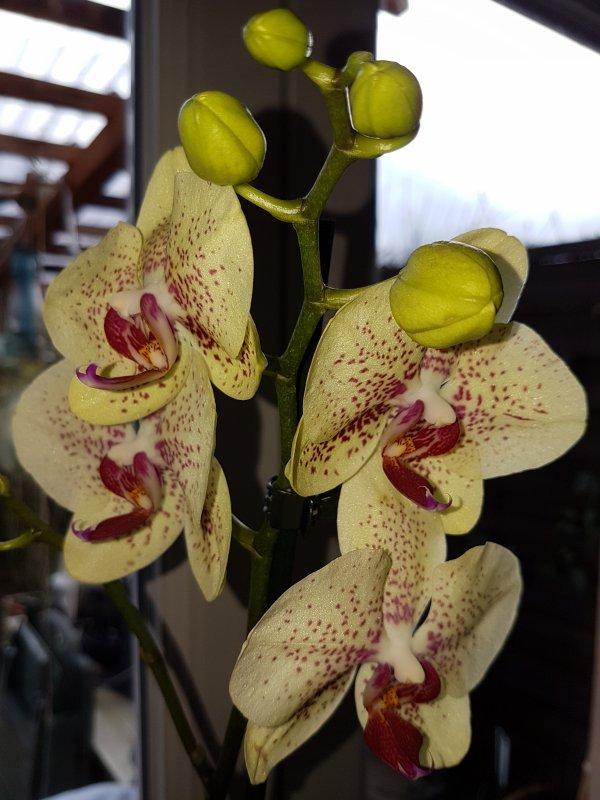 Mes Orchidées 2017