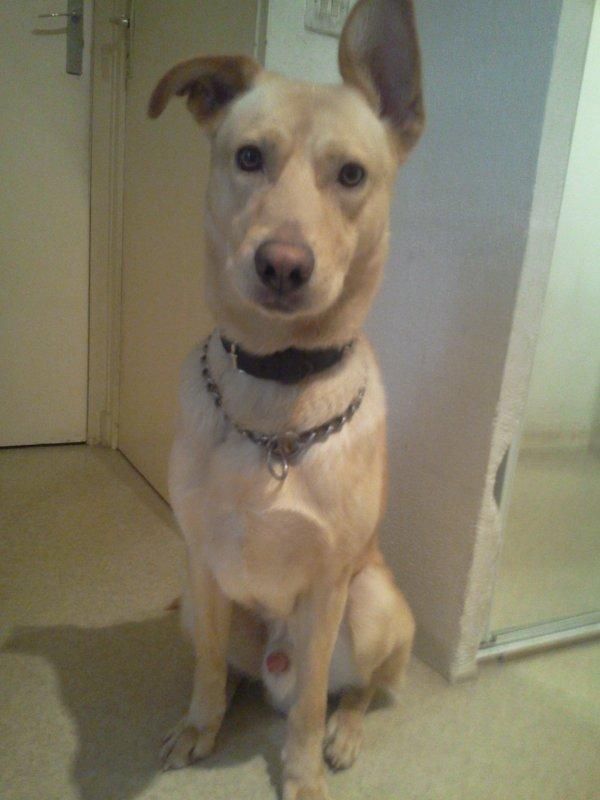mon chien très sage et beau