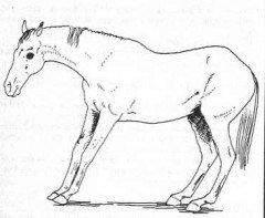 Cheval fourbue