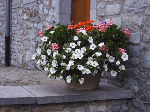 les fleurs de la commune
