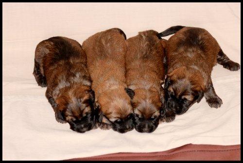 Les beaux gossos