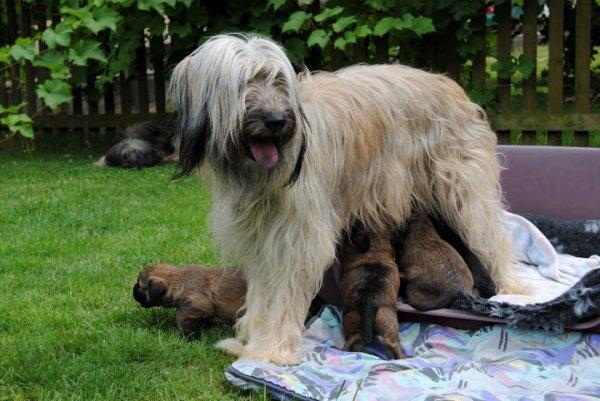 Isabella et les 7 magnifiques bébés