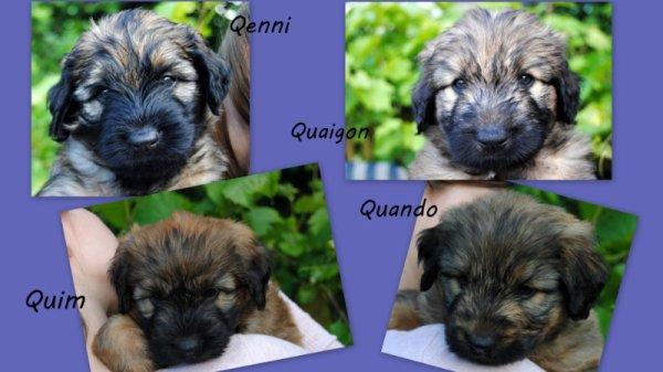 4 magnifiques chiots mâles sont disponibles en Allemagne delsomnicatala@gmail.com