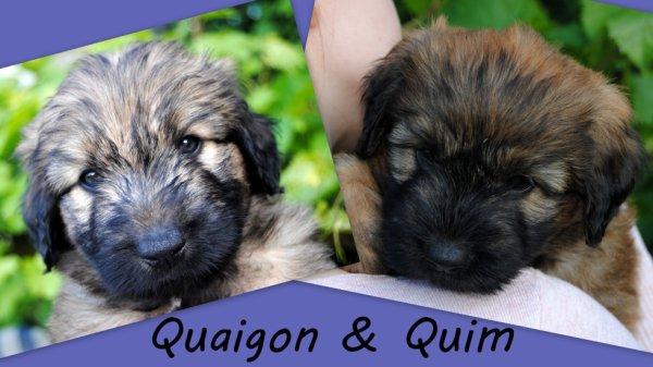 2 magnifiques chiots mâles sont disponibles en Allemagne delsomnicatala@gmail.com