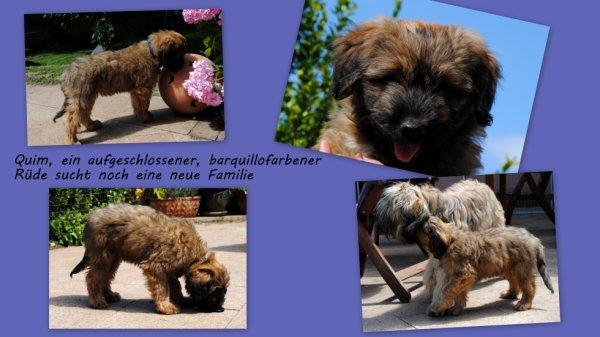 Le beau Quim est disponible en Allemagne delsomnicatala@gmail.com