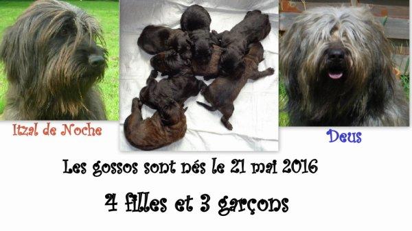 Les bébés sont nés BRAVO !!!!