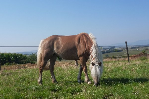 Grands poneys / petits chevaux -> Quantana