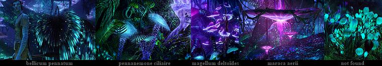 La bioluminescence