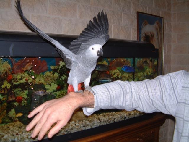 www.cage-perroquet.com (boutique en ligne)