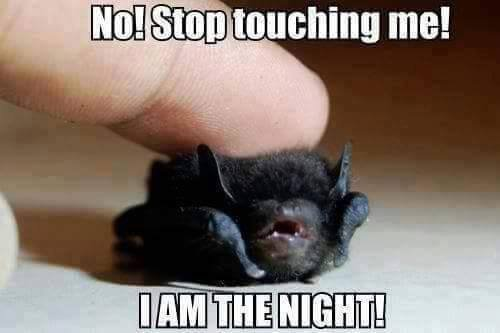 Dont touch me !