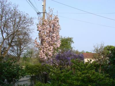 636 cerisier jardin de melimelo - Poteau electrique dans mon jardin ...