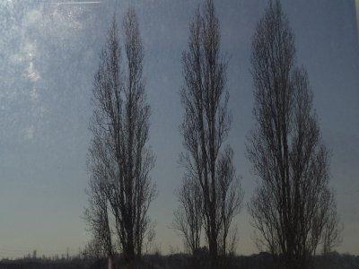 L'arbre. Une végétation si admirable. ♥