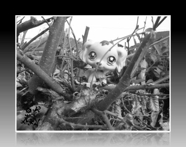 caline sur un arbre