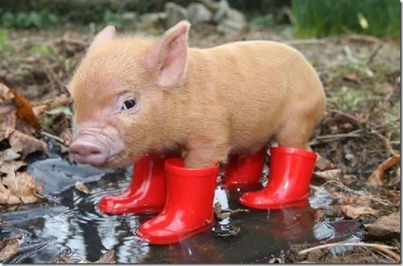 Y en a marre de ce temps de cochon.........