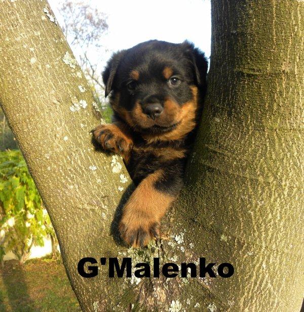Malenko
