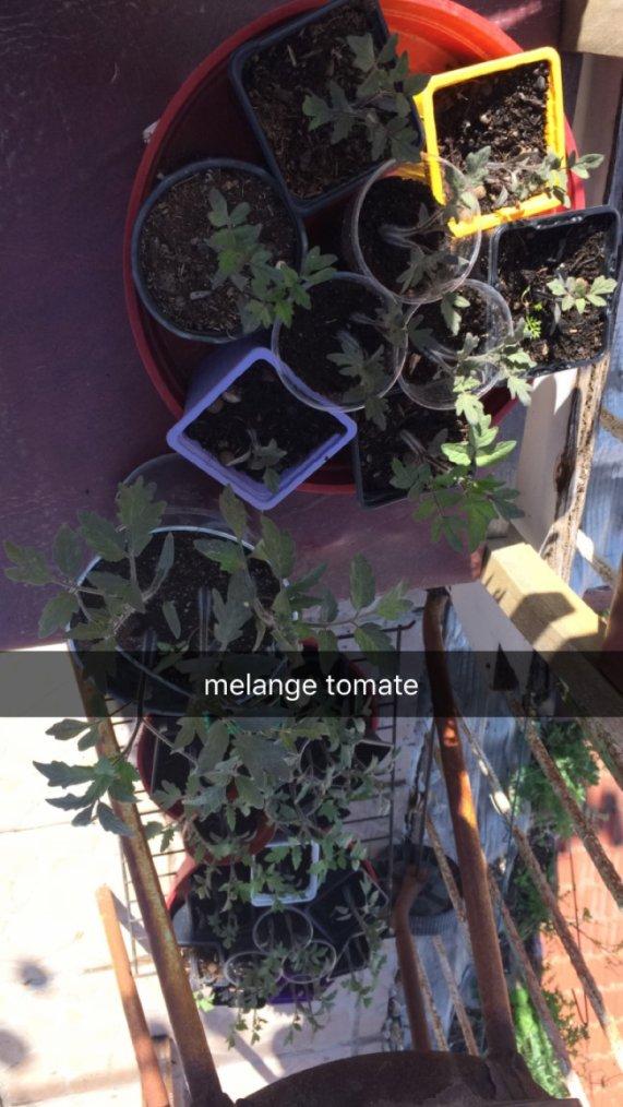 mon potager ( l'art du jardinage )