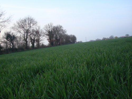photos de paysage (blé) ..........