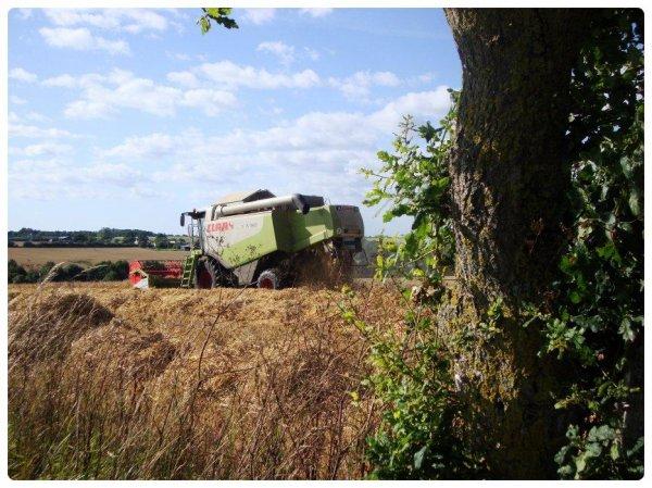 Moisson de l'Orge le 01 juillet 2012 ( CLAAS LEXION 510 ) ....